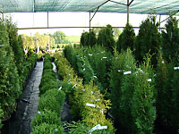 Питомник KAVERINO plants
